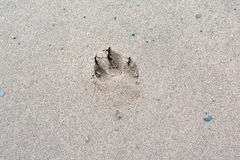 Impression. Walking along the beach in the winter and there was a dog that had walked on the beach Royalty Free Stock Photos