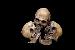 Impressionante, grupo de crânio, no fundo preto, ainda estilo de vida Fotos de Stock