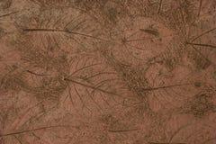 Impressione d'annata della foglia in parete Fotografia Stock