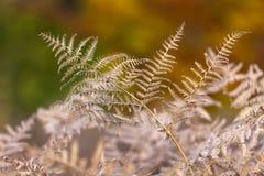 Impressione dei colori di autunno Fotografie Stock Libere da Diritti
