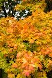 Impressione delle foglie e dei colori di autunno Fotografia Stock