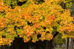 Impressione delle foglie e dei colori di autunno Fotografia Stock Libera da Diritti