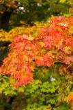 Impressione delle foglie e dei colori di autunno Fotografie Stock
