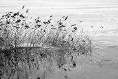 Impressioni del lago invernale Kochel Fotografia Stock