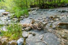 Impressioni della riva del fiume fotografia stock