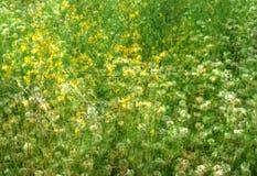 Impressionist-Feld mit Wildflowers Stockfotografie