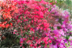 Impressionist Flowers. Flower image with impressionist artistic effects added Royalty Free Stock Images