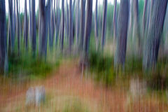 Impressionist forest scene Stock Photography