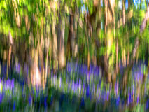 Impressionist Image of a Bluebell Wood Stock Photo