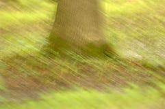 Impressionist Tree Trunk. (12MP camera). Intentional blur/pan.  NO Photoshop Stock Photo
