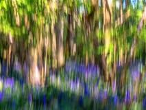 Impressionistbild av ett blåklockaträ Arkivfoto