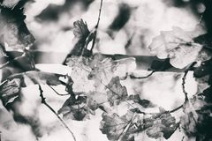 Impressionistic background with autumn brown oak leaves. Beautiful impressionistic background with autumn brown oak leaves illuminated by the warm sun Royalty Free Stock Photography
