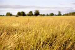 Impressionistic Country Field Landscape Royalty Free Stock Photo