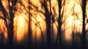 Impressionistic forest. An impressionistic editing of a winter forest scene Royalty Free Stock Image