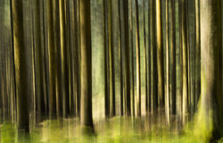 Impressionistic Forest Stock Photo