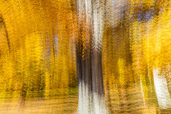 Impressionistic Yellow Tree, New England, multiple exposures, October 18, 2016 Stock Photography