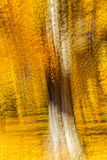 Impressionistic Yellow Tree, New England, multiple exposures, October 18, 2016 Stock Images