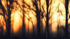 Impressionistischer Wald Lizenzfreies Stockbild
