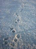Impressions de pied dans la neige Photographie stock libre de droits