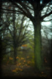Impressions of trees. Landscape of trees in the fall. Shot through wet glass. Focus is sharp but distorted Stock Photography