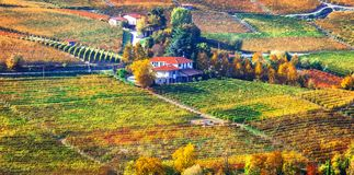 Pictorial countryside and beautiful vineyards of Piemonte in autumn colors. Italy stock photo