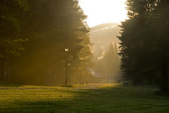 Impressive morning. Sun rays shining through the old trees Stock Photos