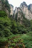 Impressive mountain needles in Zhangjiajie national park Royalty Free Stock Photography