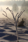 Impressive stem of grass in winter day Stock Photos