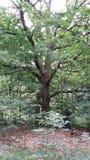 Impressive tree Stock Photos