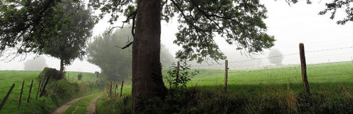 Impressive tree in grassland landscape Royalty Free Stock Photos
