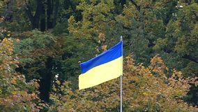 A blue and yellow Ukrainian flag swaying in the air in forest in slo-mo. An impressive view of a blue and yellow Ukrainian flag swaying in the air in green pine stock video footage