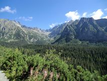 Pine forest and view of the Tatra Mountains, Slovakia. An impressive view of the Tatra Mountain range above a valley with pine forest, Slovakia royalty free stock photography