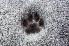 Impressum einer Katze ` s Tatze auf dem Schnee auf der Straße Stockbild