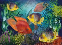 Underwater background with tropical fish, Red Parrot and Royal angelfish, vector. Illustration stock illustration