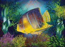 Underwater background with Royal Angelfish, vector. Illustration stock illustration