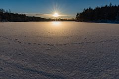 Imprint of animal in snow on ice. In varmland sweden stock image