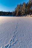 Imprint of animal in snow on ice. In varmland sweden stock images