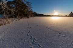 Imprint of animal in snow on ice. In varmland sweden royalty free stock photo