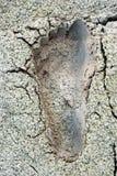 Imprint av en oisolerad fot Fotografering för Bildbyråer