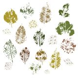 Imprint of different leaves on a white background.Vector. vector illustration