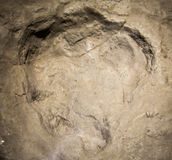Imprint dinosaur track Stock Image