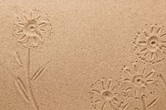Imprint of field flowers on the sand. Conceptual image. View from above Royalty Free Stock Images