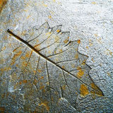 Imprint leaf. The Imprint leaf on cement floor Royalty Free Stock Image