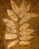 The Imprint leaf Stock Images