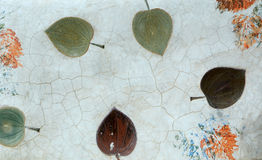 The Imprint of leaf Stock Images