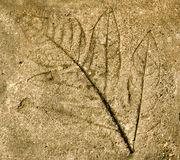 Imprint of  leaf Royalty Free Stock Photo