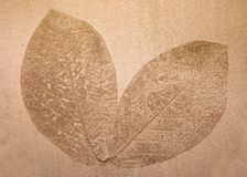 Imprint leaf Stock Photo