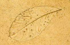 Imprint leaf on cement floor background Royalty Free Stock Photography