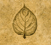 Imprint leaf on cement Royalty Free Stock Image