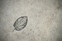 The Imprint leaf on cement floor Royalty Free Stock Image